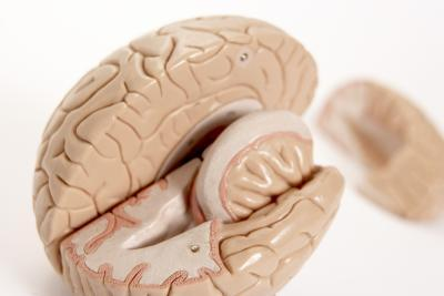 Does Hearing Loss Shrink Your Brain?